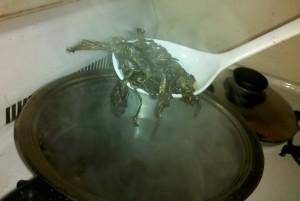 cicada soup
